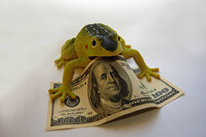 Картинки Лягушка Игрушка Деньги Банкноты Доллары 100
