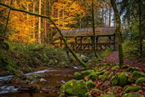 Картинки Германия Лес Осенние Камень Мост Мха Ручеек Baden-Baden Природа