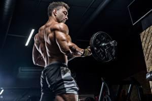 Обои Мужчина Штангой Мускулы Спортзал Физическое упражнение Спины спортивная