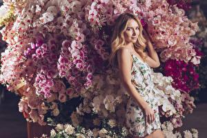 Фото Орхидея Блондинки Смотрят Платье Девушки