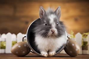 Фото Кролик Пасха Яйца Морды животное