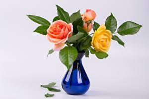 Картинки Роза Букет Вазе цветок