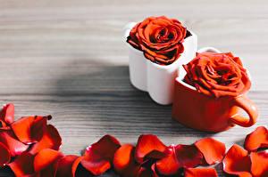 Картинки Роза Кружка Лепестки Красный