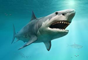 Обои для рабочего стола Акулы Зубы Животные 3D_Графика