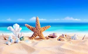 Фотографии Морские звезды Ракушки Море Песок Природа