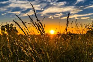Фотография Рассвет и закат Траве Солнца Природа