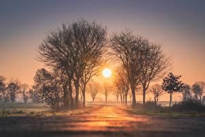 Фото Рассвет и закат Дерево Солнца Тумане Природа