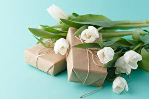 Обои Тюльпан Букет Подарок Цветной фон цветок