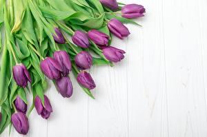 Фотографии Тюльпаны Много Фиолетовых Шаблон поздравительной открытки Цветы