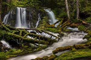 Обои Штаты Лес Водопады Реки Вашингтон Деревьев Мох Big Creek Falls Природа
