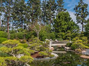 Фото Америка Сады Парки Мосты Пруд Дерево Кустов Earl Burns Miller Japanese Garden Long Beach Природа