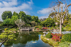 Фотографии Штаты Сады Пруд Мост Дерево Кустов Earl Burns Miller Japanese Garden Long Beach Природа