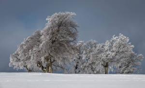 Фотография Зимние Дерево Снега Природа