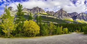 Фотография Канада Парк Гора Лес Пейзаж Дерево Природа