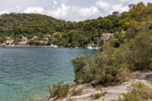 Картинка Хорватия Берег Холм Кустов Mljet Island Природа