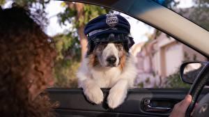 Обои Собака Шляпа Полицейские Смешные Окна животное