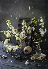 Фотографии Цветущие деревья Натюрморт На ветке Ваза Цветы