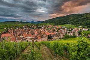 Картинка Франция Дома Поля Виноград Холм Кустов Riquewihr город