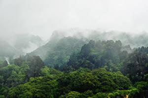 Картинки Горы Лес Тумане Laos Природа