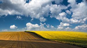 Картинки Рапс Поля Небо Облачно