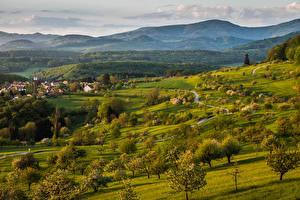 Обои Швейцария Пейзаж Гора Весенние Дерево Трава Baselland