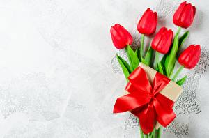Картинка Тюльпан Бантик Красных Шаблон поздравительной открытки цветок