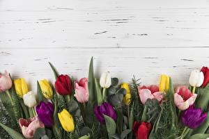 Картинка Тюльпан Доски Разноцветные Шаблон поздравительной открытки цветок