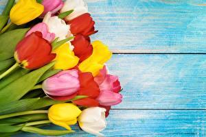 Фото Тюльпаны Доски Разноцветные Шаблон поздравительной открытки Цветы