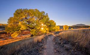 Картинки США Вечер Деревья Солнце Тропа Prescott, Arizona Природа