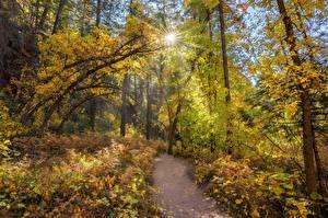 Фотография Штаты Лес Дерево Тропинка Солнца West Fork, Sedona, Arizona Природа