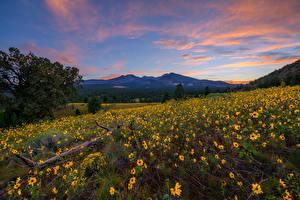Обои Штаты Гора Вечер Подсолнечник Холм Дерево Flagstaff, Arizona Природа