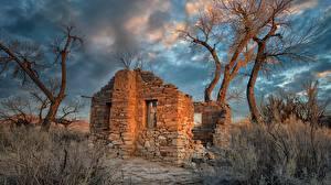Фотография Америка Руины Дерево Hanksville, Utah, Cottonwood Trees Природа