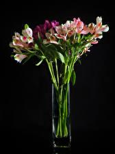 Обои для рабочего стола Альстрёмерия На черном фоне Вазе Цветы