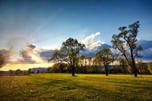 Фотография Австрия Луга Небо Деревья Облако Engerwitzdorf
