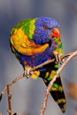 Фотографии Птица Попугаи