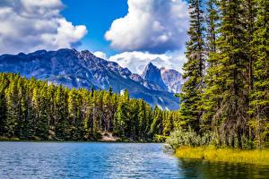 Картинки Канада Парки Озеро Гора Лес Банф Дерево Johnson Lake Природа