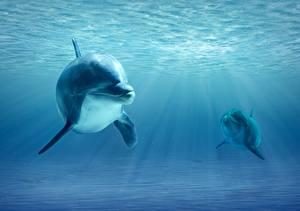 Обои для рабочего стола Дельфины Подводный мир Лучи света Два животное