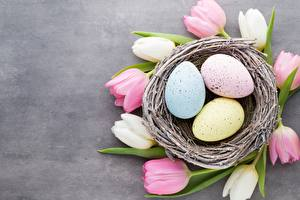 Фото Пасха Тюльпан Гнезда Яйцо цветок