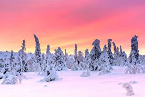 Фотография Финляндия Лапландия область Зимние Вечер Снега Дерево Riisitunturi National Park, Posio, Finnish Lapland Природа
