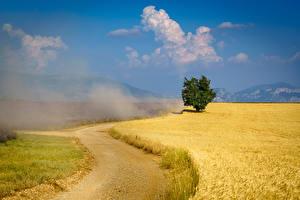 Картинка Франция Прованс Поля Дороги Деревья пыль Природа