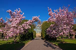 Фото Германия Весенние Сады Цветущие деревья Кустов Stuttgart Magnolia garden Природа