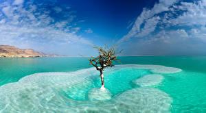 Фото Израиль Море Небо Дерево Облачно Dead Sea, Neve Zohar Природа