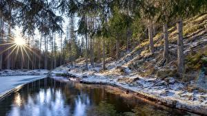 Картинки Италия Лес Деревья Солнца Снеге Лучи света Veneto, Cortina d'Ampezzo