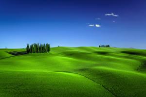 Обои Италия Тоскана Небо Луга Холм Дерево Torrenieri