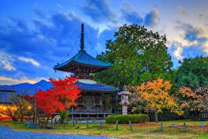 Фото Япония Киото Парк Пагоды Осенние HDRI Дерево Лучи света Seiryo-ji Природа