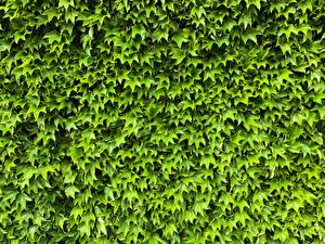 Картинка Много Листва Зеленая Природа