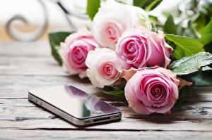 Картинка Розы Букеты Капель Сматфоном Размытый фон цветок