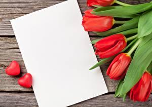 Фотография Тюльпаны Шаблон поздравительной открытки Красная Цветы