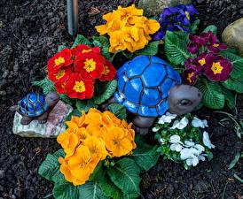 Обои для рабочего стола Черепахи Примула Разноцветные Цветы