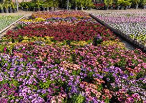 Картинка Штаты Сады Газания Много Калифорнии United Plant Growers in Long Beach